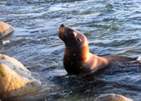 Sea Lion Visits Dominica