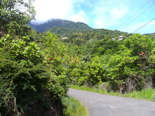 View at Morne A-Louis